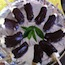 Thumbnail image for Chocolate Covered Banana Pops Recipe